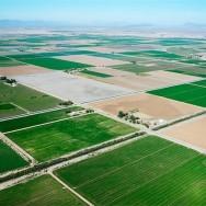 Определены основные направления поддержки аграриев на 2020 год