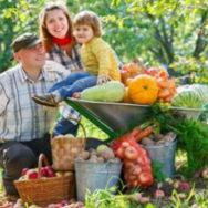 Одобрена концепция развития фермерства для малого и среднего бизнеса в селах